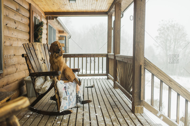 Dog on rocking chair on porch