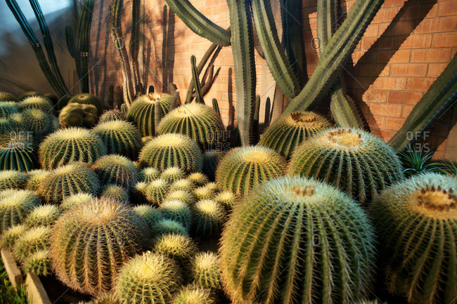 Close up view of cacti plants