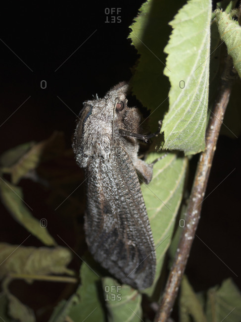 Black insect perching on leaf at night