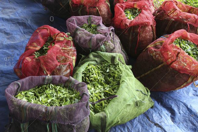 High angle view of sacks full of tea leaves