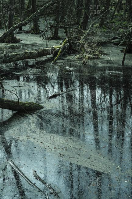 Fallen tree trunks in mossy river
