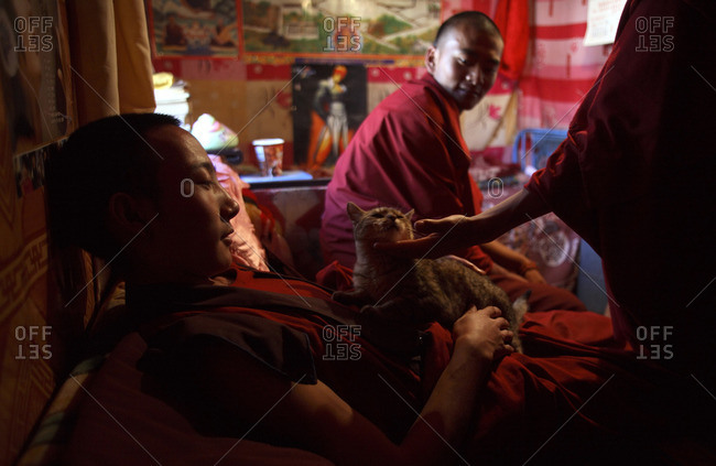 Kyushu, Qinghai Province, China - July 23, 2006: Buddhist monks playing with a cat in a dorm room at Dondrub Ling Monastery in Kyushu, China