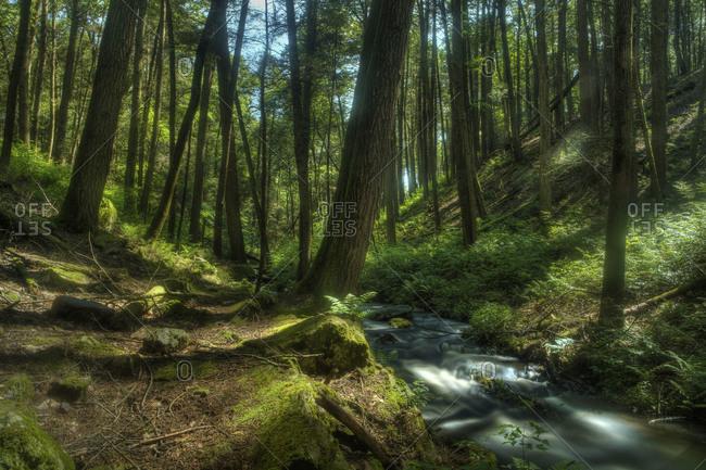 Stream running through a green forest