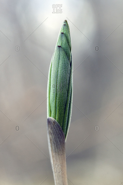 Close up of a flower bud