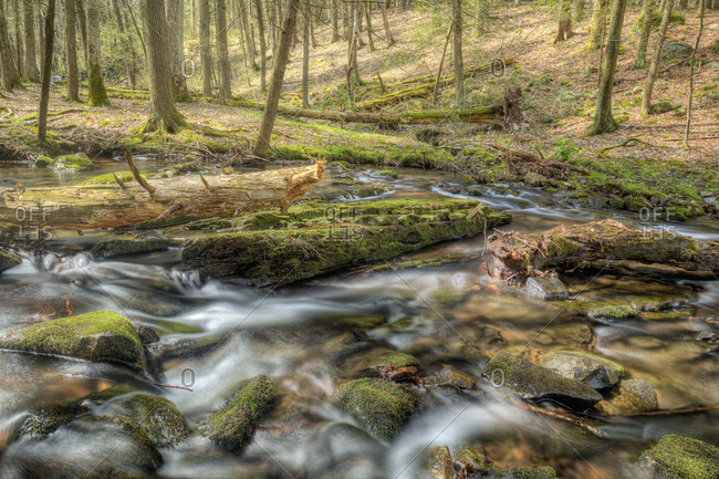 Rocky stream in a forest