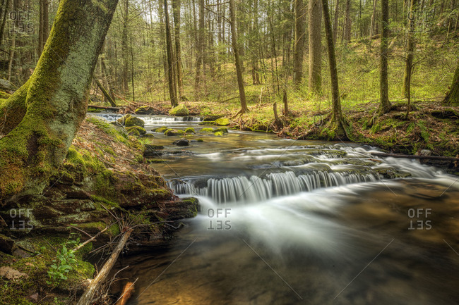 River in a deciduous forest