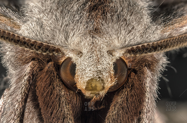 Close up of a white moth