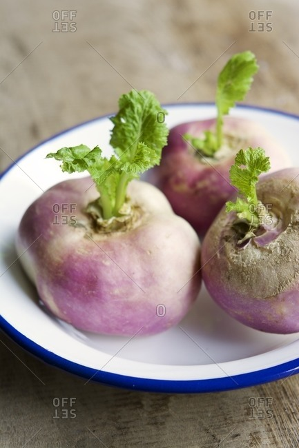 May Turnips Brassica Rapa Subsp Rapa Var Majalis In An Enamel Bowl Stock Photo Offset
