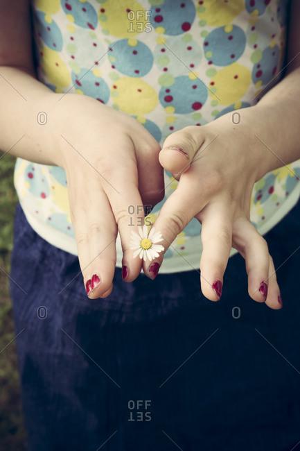 Little girl's hands holding single daisy, Bellis perennis
