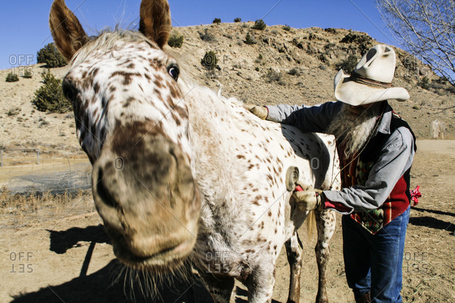Cowboy grooming his horse in Cerrillos, New Mexico, United States