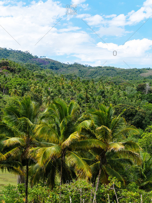 View over the trees, Dominican Republic