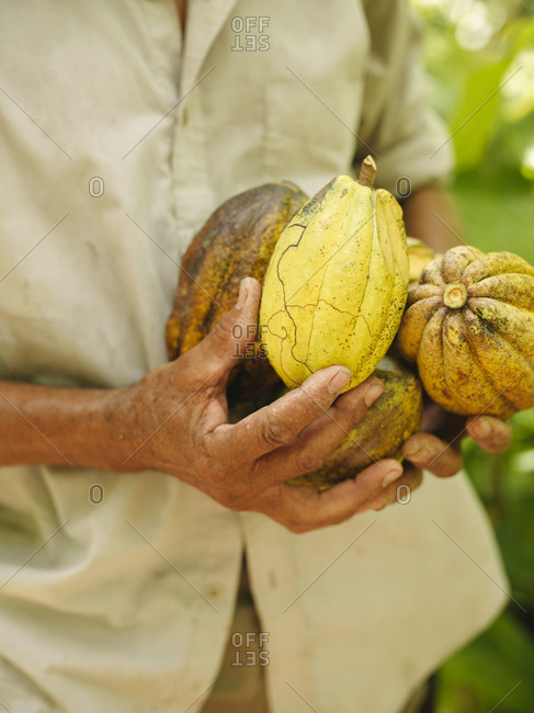 Man holding cacao pods, Dominican Republic