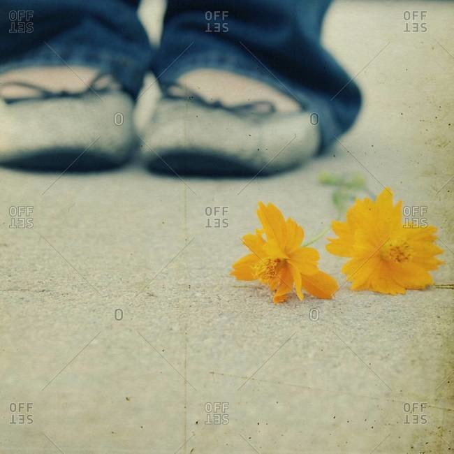 Person standing behind yellow flower on ground
