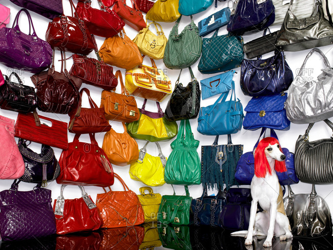 Greyhound wearing a wig amongst colorful handbags