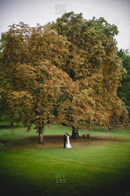 Newlywed couple posing under a tree