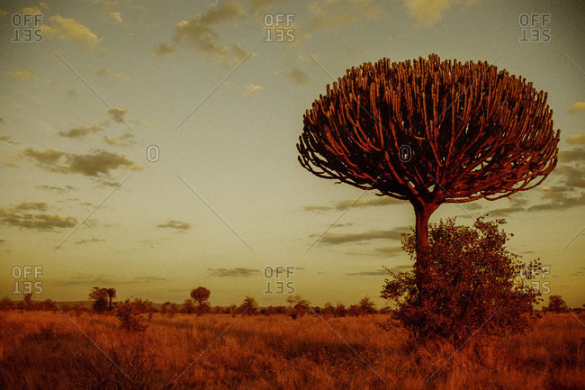 Arid foliage in the red light of dusk