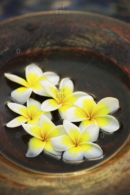 Flowers floating in a bowl
