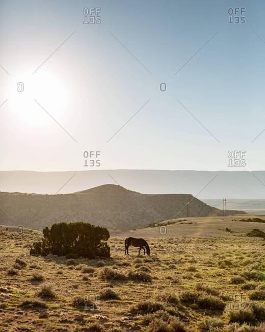 Horse grazing, Bighorn Canyon, Montana