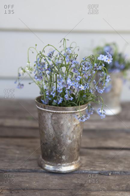Blue flowers in a silver pot