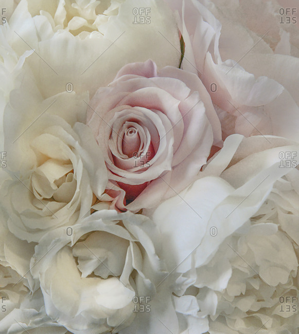 Close up of roses and peonies