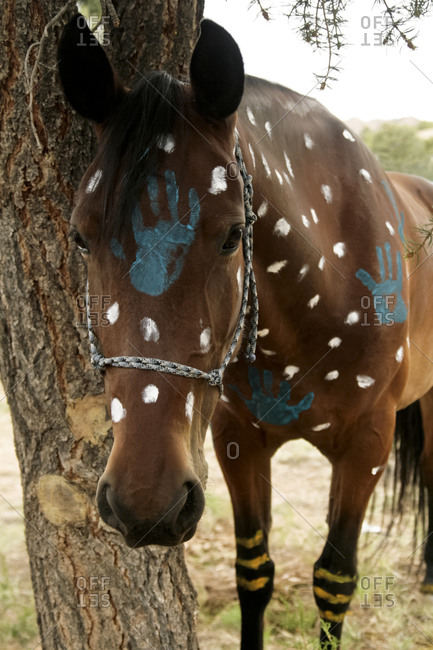 Painted horse in Nambe Pueblo, New Mexico, United States