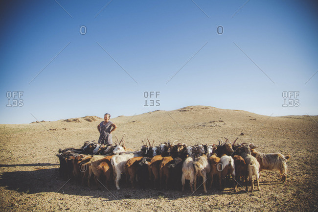 Mongolia - August, 2013: Mongolian woman herding goats