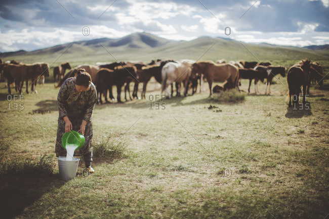 Mongolia - August, 2013: Group of horses grazing while a Mongolian woman pouring milk into a tin bucket