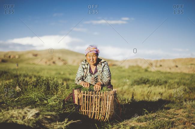Mongolia - August, 2013: Mongolian woman harvesting grass