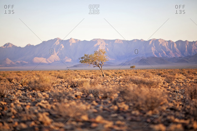 The sun rises over a lone tree in the Namib Desert and the distant Naukluft mountains