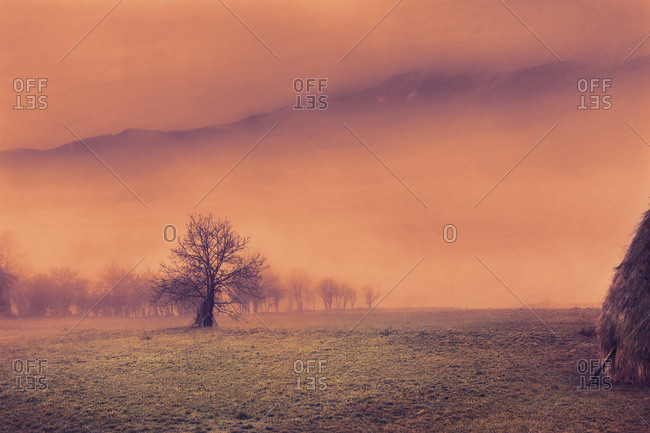 Mysterious scene in southwestern Serbia with apple tree and mountains in the distance rising from the  fog