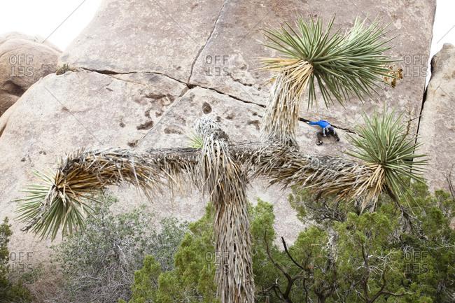 Man climbing a rock at Rubicon in Joshua Tree National Park, California