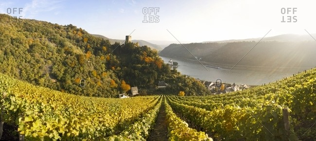 Gutenfels castle with vineyards in the foreground