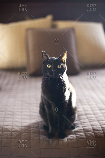 Black cat sitting on a bed
