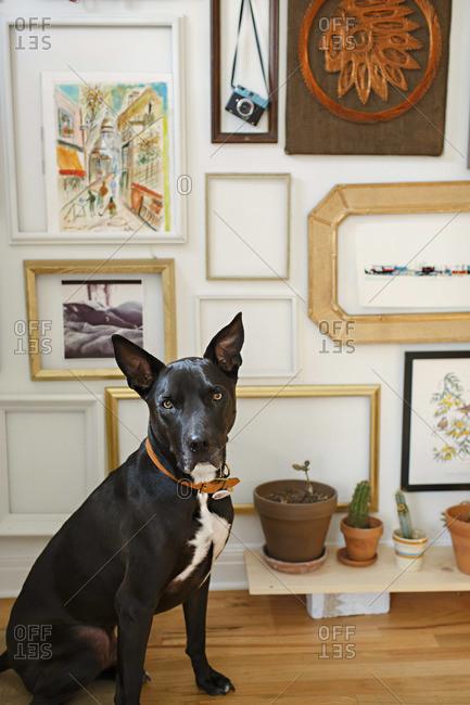 Portrait of a watchful black dog