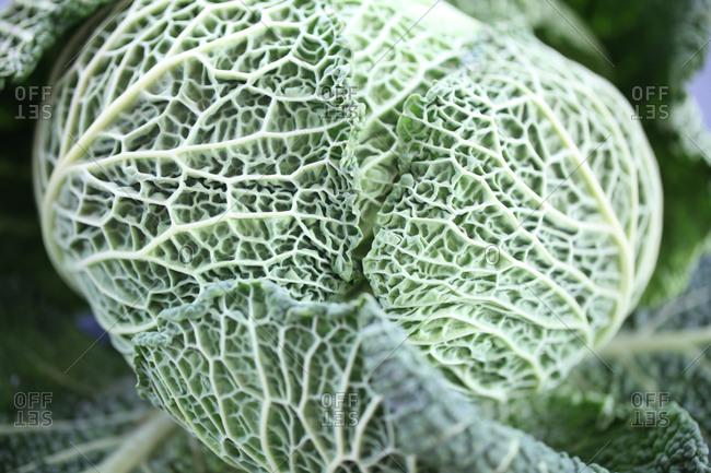 Vitamin rich savoy cabbage - Offset