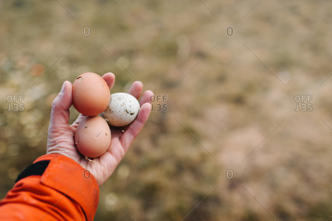 Person holding a handful of eggs