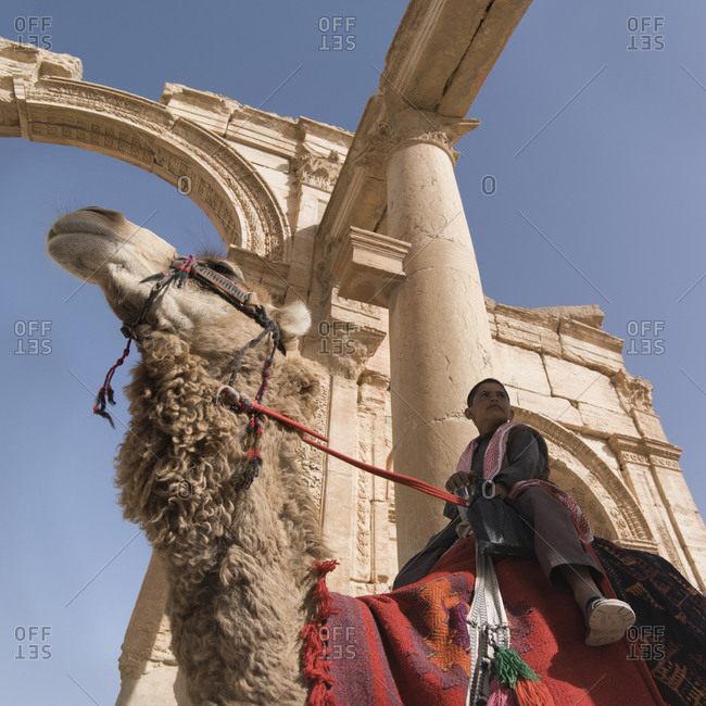 Palmyra, Syria - September 25, 2009: A Bedouin boy on a camel in ancient Palmyra, Syria
