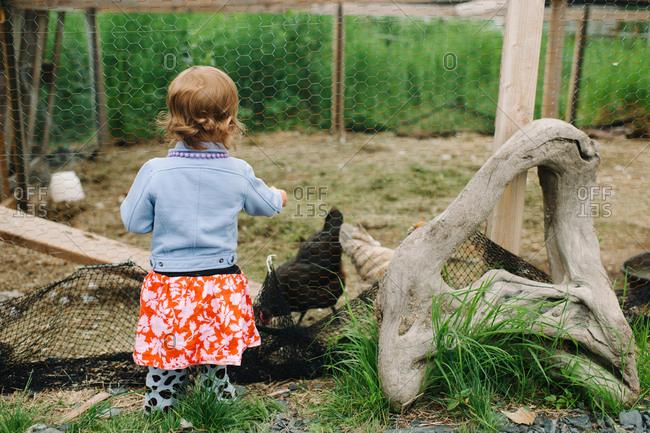 A little girl feeding a chicken
