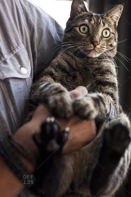 Man holding tabby cat