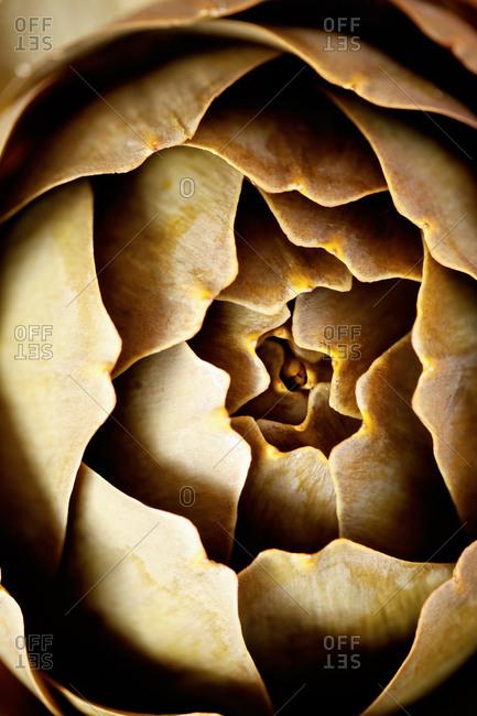 Close up of artichoke globe