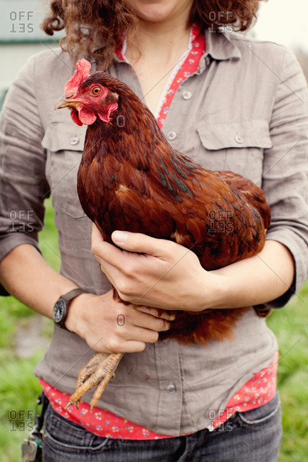 Mid section view of woman holding  free-range chicken at a farmyard