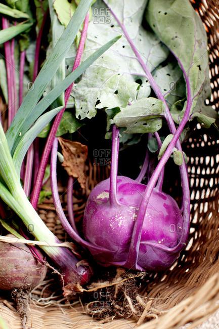 Fresh purple kohlrabi in a basket