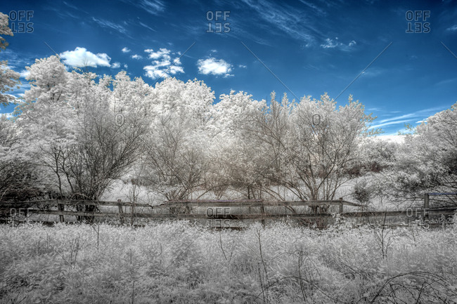 White foliage landscape