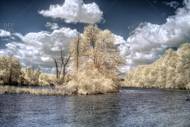 Lake landscape with yellow foliage