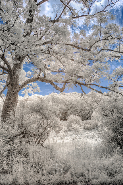White foliage landscape close up