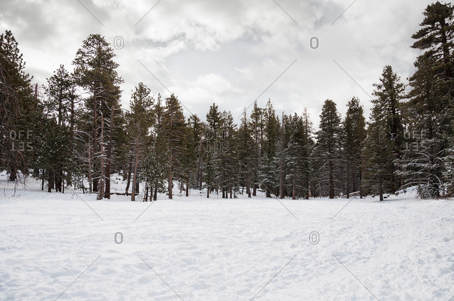 Snow-covered trees in a forest