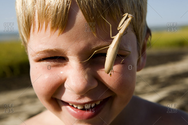 Closeup of a laughing boy with a praying mantis crawling on his face.
