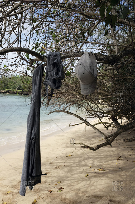 Clothes hanging from a tree branch on a beach