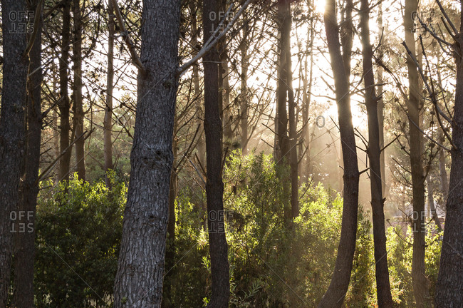 Woods in Pinamar in Buenos Aires Province, Argentina