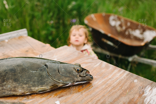 Dead fish on a wooden table